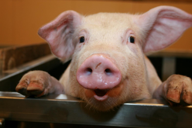 Szybka świnia, czyli 20 cytatów o zarządzaniu zmianą
