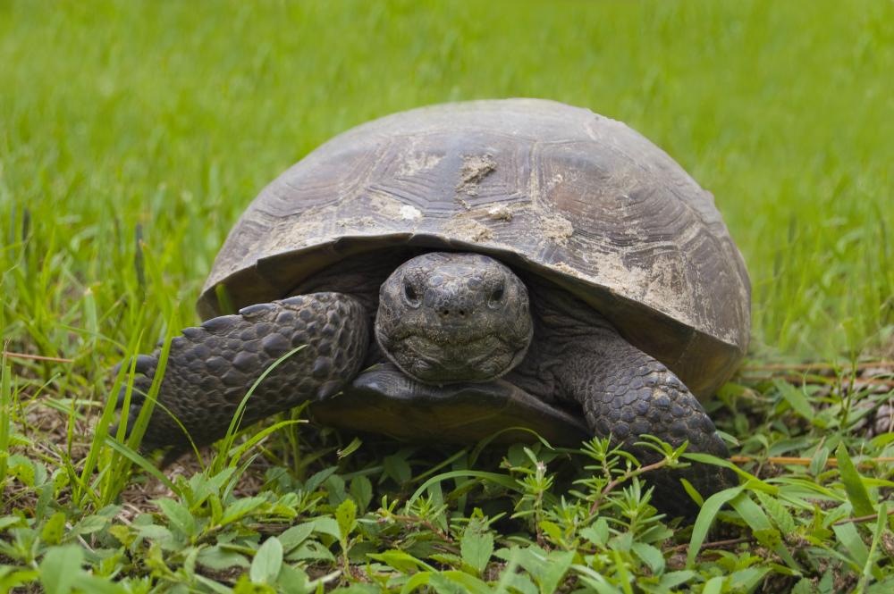 Nowy zwycięski tandem: żółw i zając